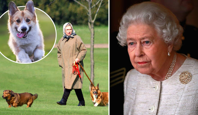 The Queen has tragically lost one of her new puppies
