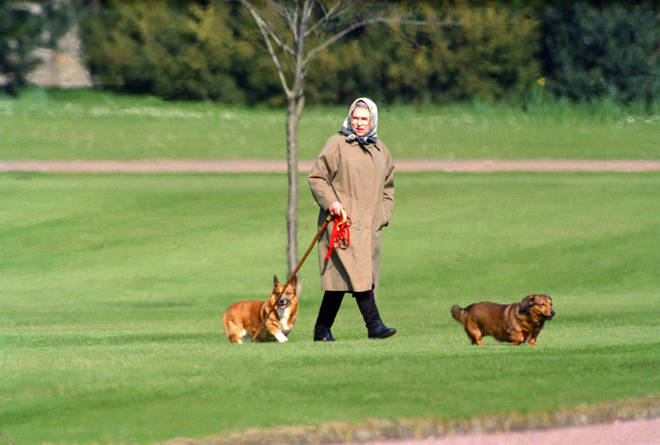 The Queen is believed to have been walking the puppies a lot following the death of her beloved husband, Prince Philip