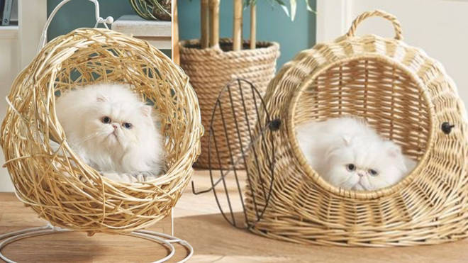Aldi is now selling hanging egg chair for your cat