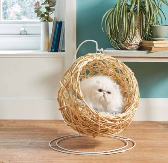 Aldi has now launched a hanging egg chair for your cat