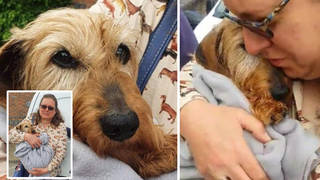 Rikki was reunited with his owner Shelley this week after two months