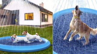 You can now get a paddling pool with a sprinkler for your dog