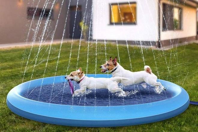 Dog Fountain Splash Mat by Big Ralph