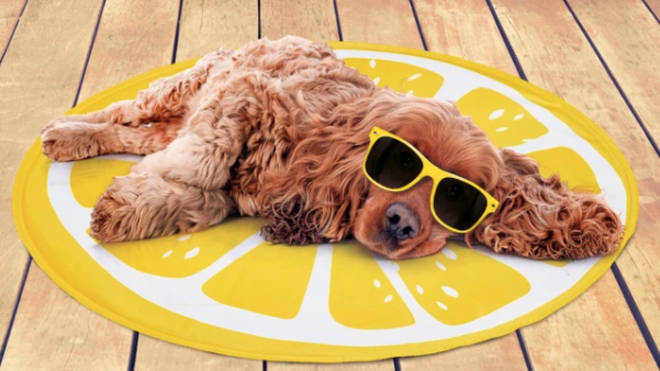 B&M's cooling mats for dogs