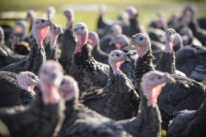 A farm shop is offering a 'pick your own turkey' service