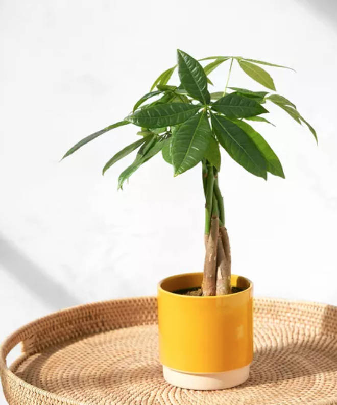 Bloom & Wild is offering a special Father's Day range - including house plants