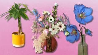 The best Father's Day flowers and plants