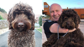 A dog has been hailed as a hero after saving a woman