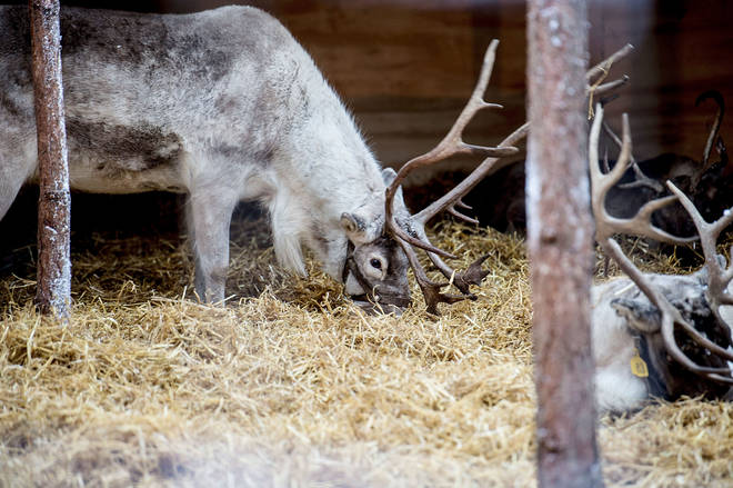 8 events have cancelled plans for live reindeer entertainment