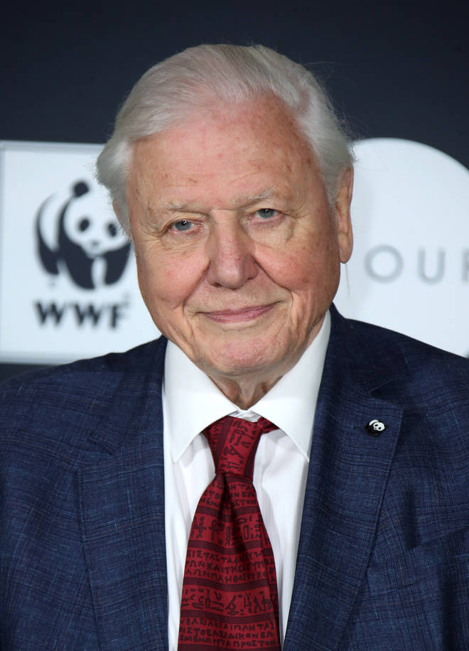 David Attenborough has spoken on the necessity of reflecting 'tragedy'