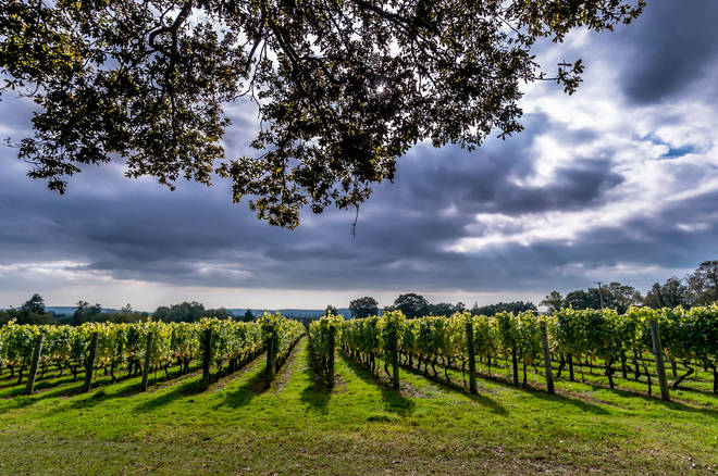 This wonderful English vineyard has been producing wine for over 30 years