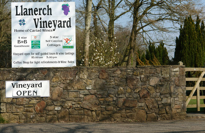 Have you tried Welsh wine?