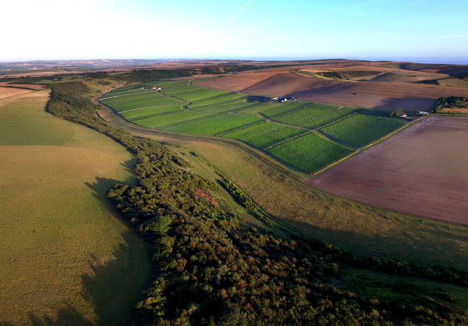 An aerial view of the wine estate in the Sussex South Downs