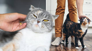 Cats should give you consent before you stroke them, an expert has claimed