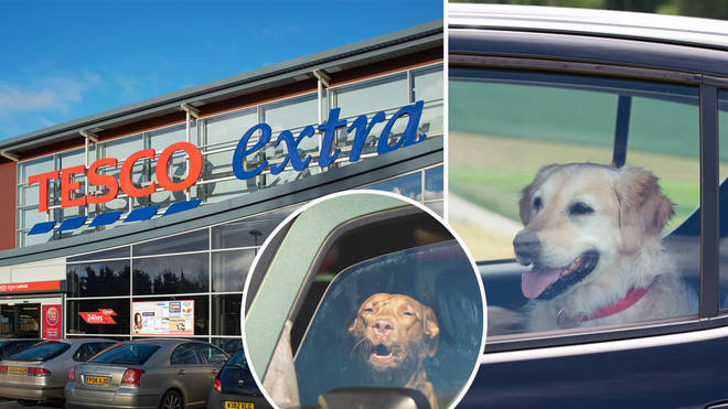 Tesco are doing their bit to help keep dogs safe in the hot weather