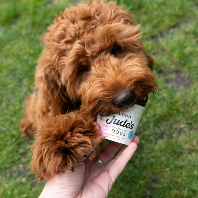 Let your dog cool down with his own little tub of ice cream