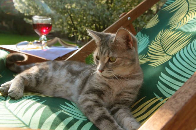 This cat is enjoying the sun in a very sophisticated way!