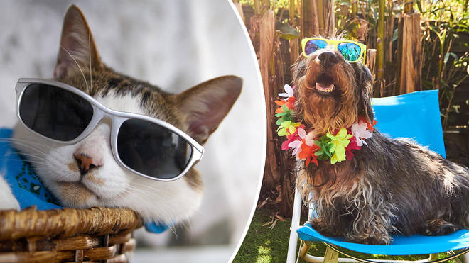 Make sure your furry friends stay cool as the weather hots up