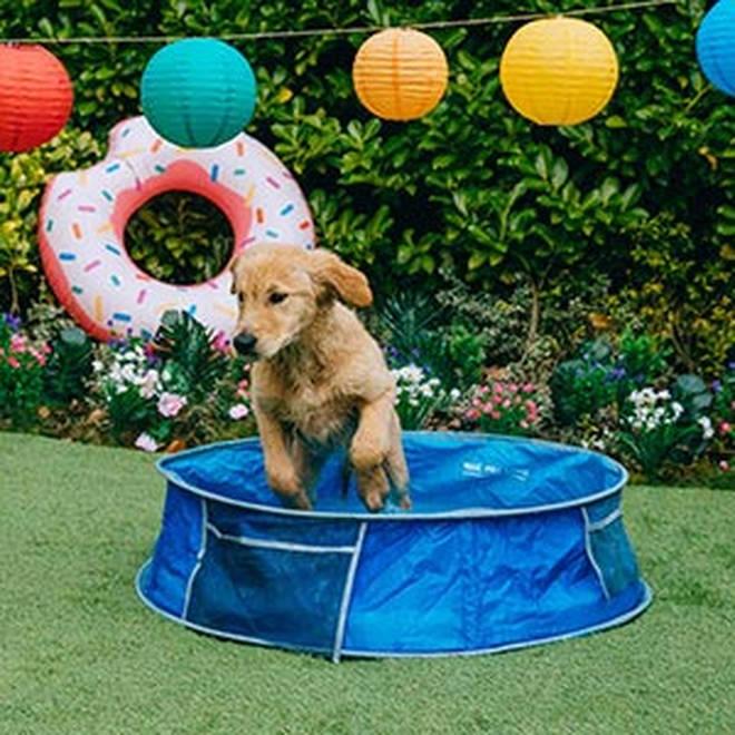 Dogs will love splashing around in their own paddling pool