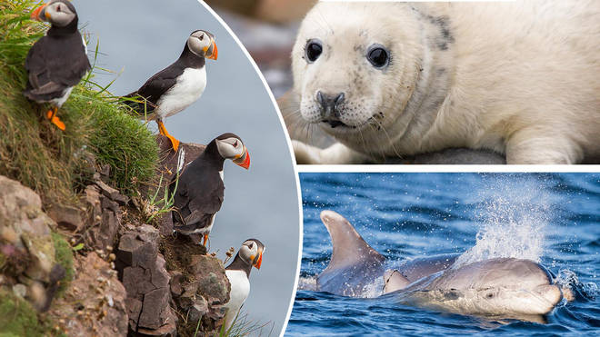 The UK has some incredible wildlife, and it's so easy to see!