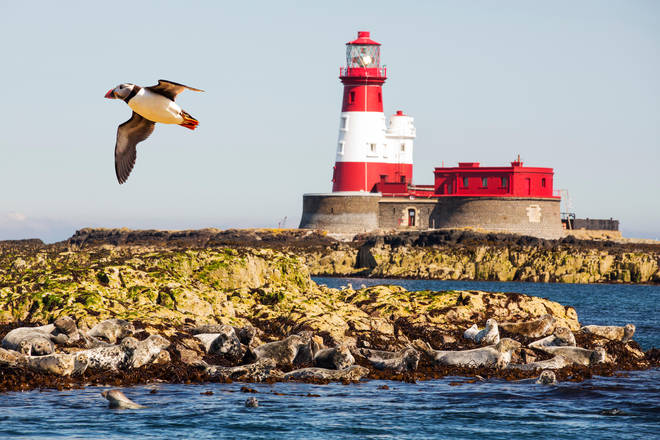 The Farne Islands in Northumberland are home to seals and a huge puffin colony