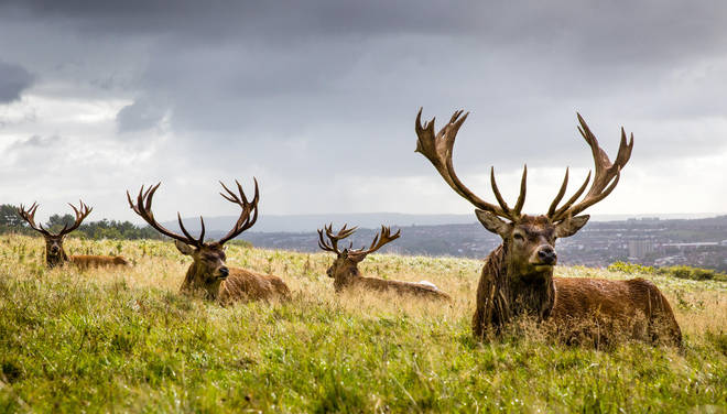 Scotland is famous for its magnificent stags, but there's more to see