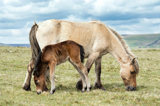 There are wild ponies on Dartmoor - and more wild animals live off the coast