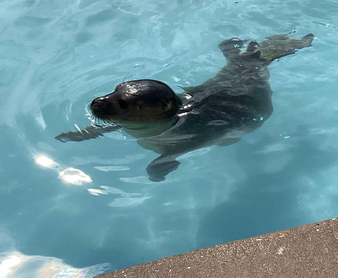 At Natureland you can meet rescued seals who are being rehabilitated to return to the sea