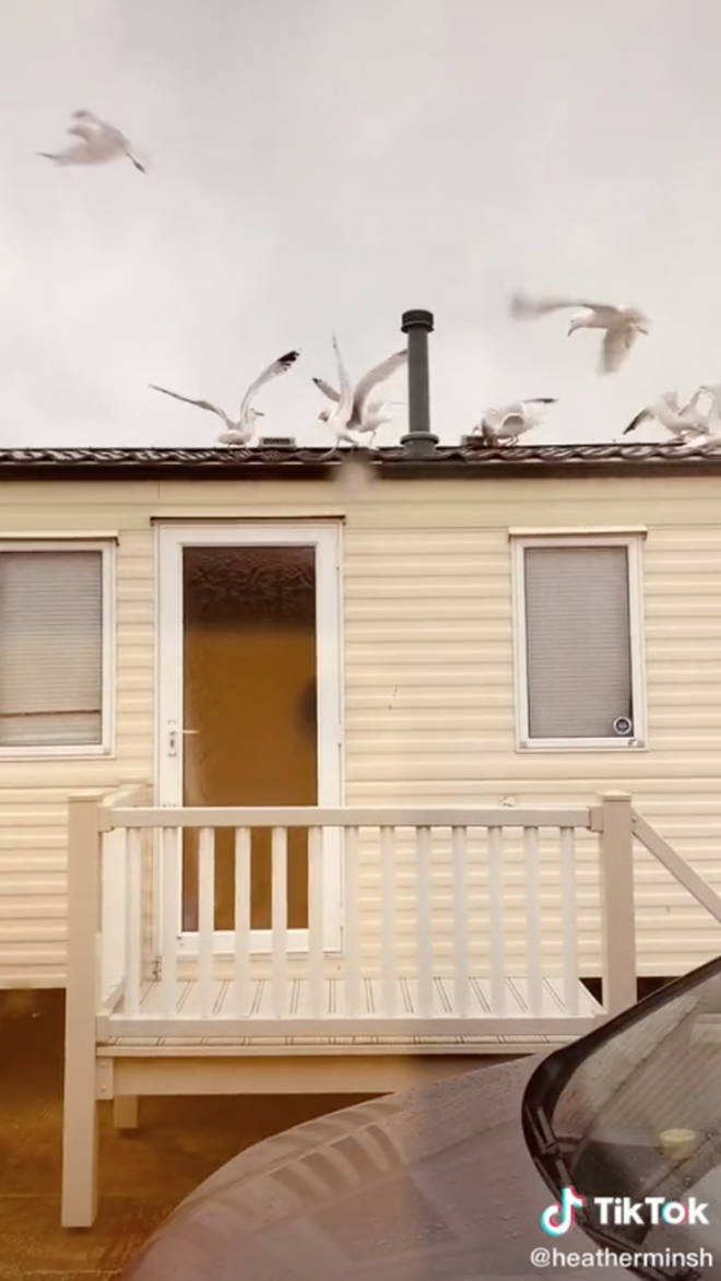 The seagulls flocked to the group's caravan after Heather threw bread on top of it