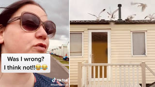 Woman lures seagulls to noisy neighbours' roof with bread at 7am in ultimate revenge