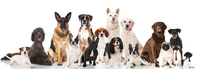 TeamDogs has teamed up with Pooch and Mutt to give us the ultimate ranking of the UK's favourite dog breeds