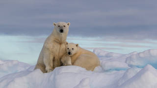 Isle of Man residents have been shocked by a polar bear display