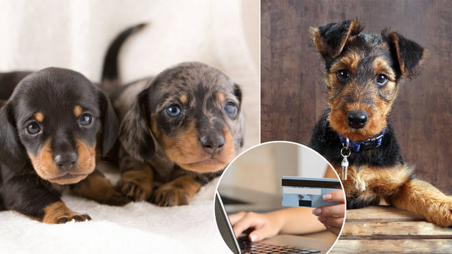 Puppy scams are on the rise