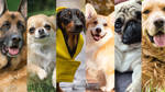 Answer these eight questions and we'll tell you which dog you are