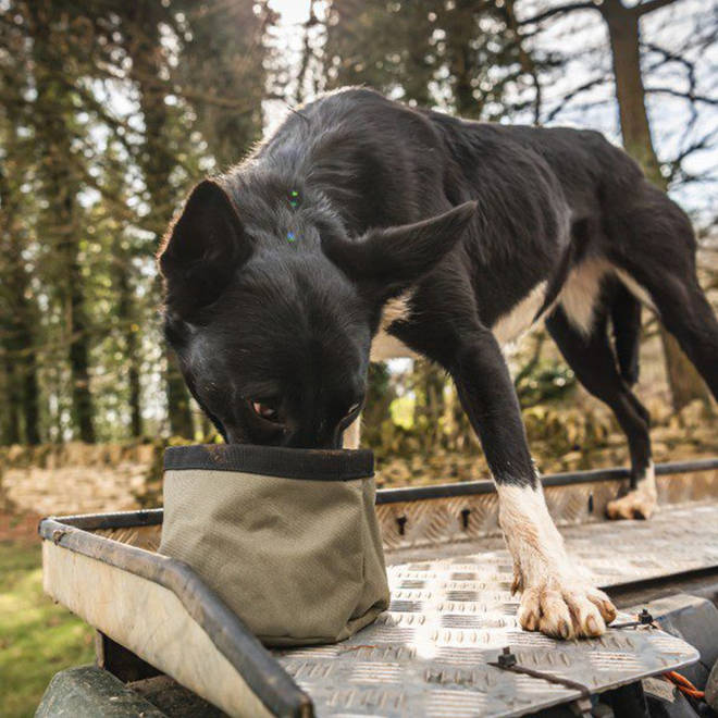 This lightweight portable dog bowl will keep your pooch hydrated