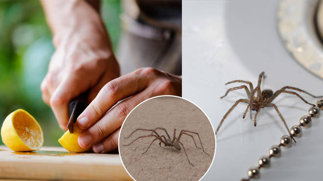 Here's how to keep spiders away from your home this year