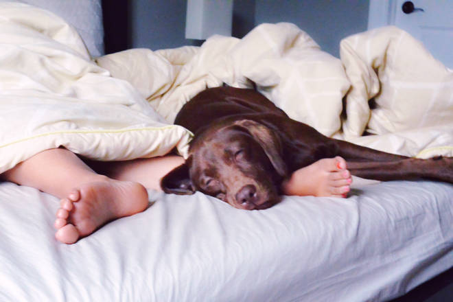 Would you let your pooch sleep in bed with you?