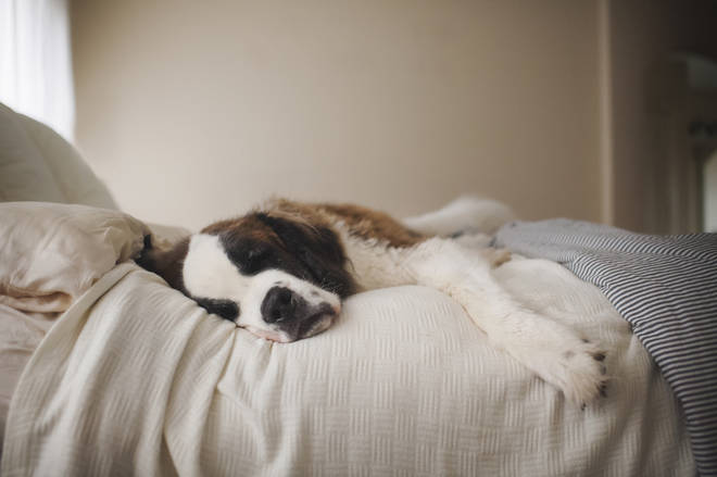Dogs were preferable sleeping partners to cats (and humans!)