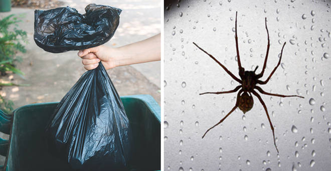 Keeping your outside bin clean can help keep spiders out of your house (stock images)