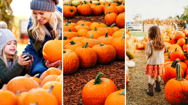 The UK's best pumpkin patches of 2021 for the perfect Halloween day out