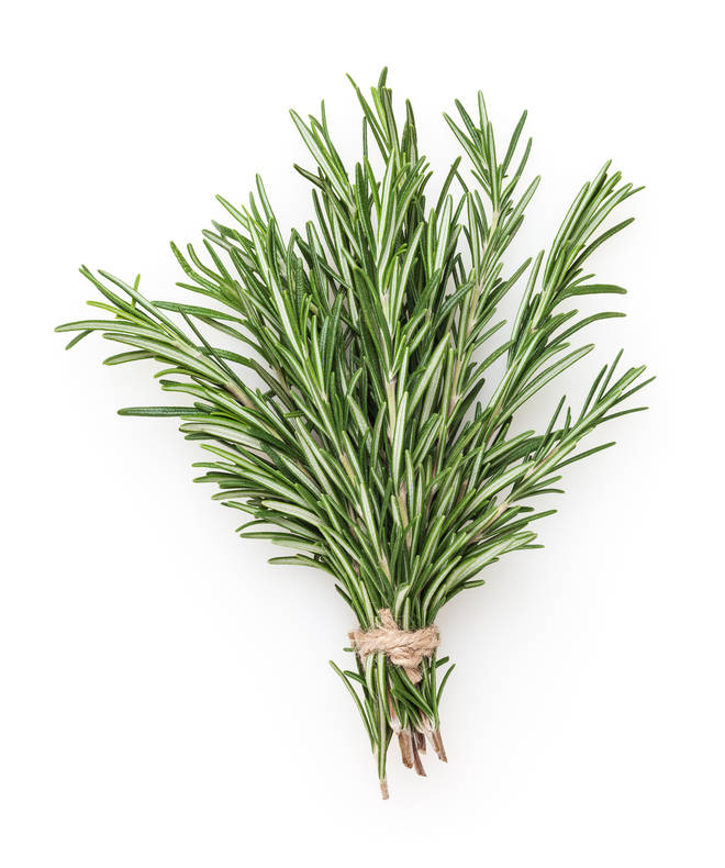 You can keep your rosemary inside to help it keep the pungent scent