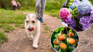 How to protect your dog from dangerous plants
