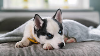 A boss has asked whether pet owners should be offered paid leave
