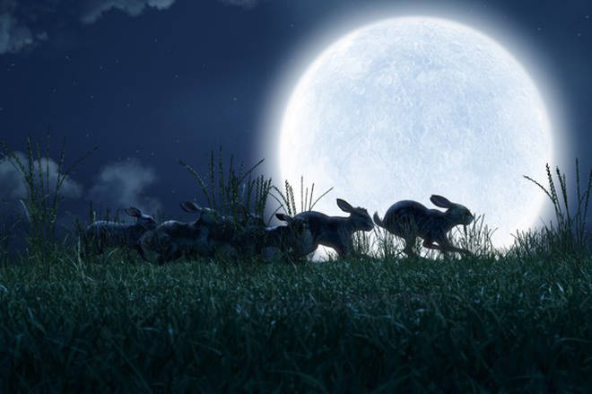 Watership Down comes to the BBC in the form of two feature-length episodes