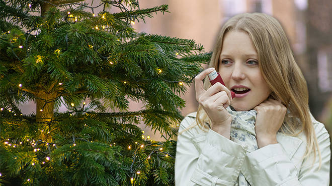 Asthma could be triggered by Christmas trees
