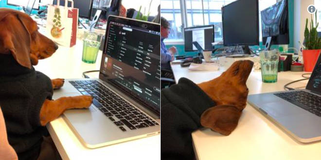 A dog on a laptop from Twitter's 101 funniest British tweets