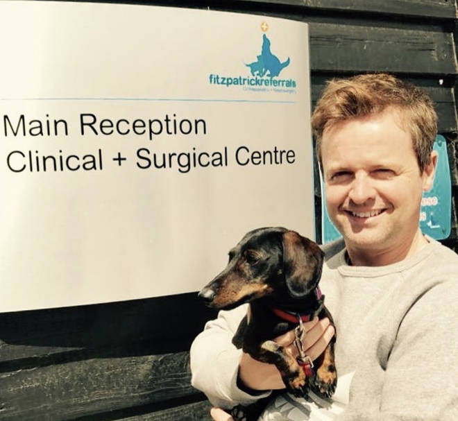 Dec's fur baby Rocky needed some medical attention from the Supervet