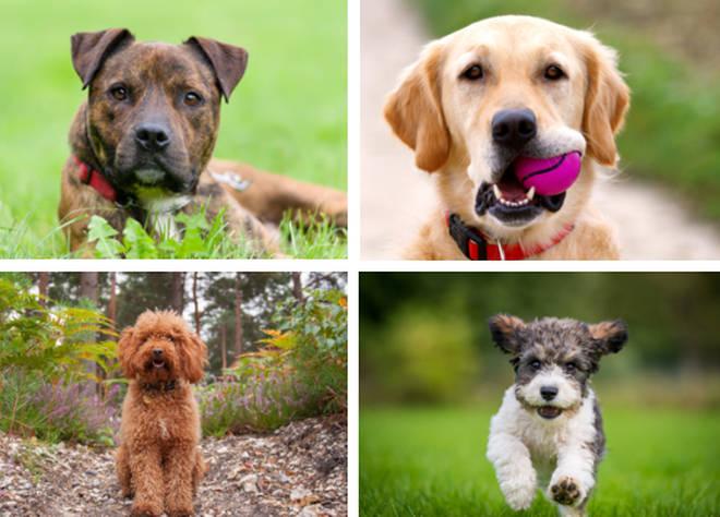 10 top dog breeds