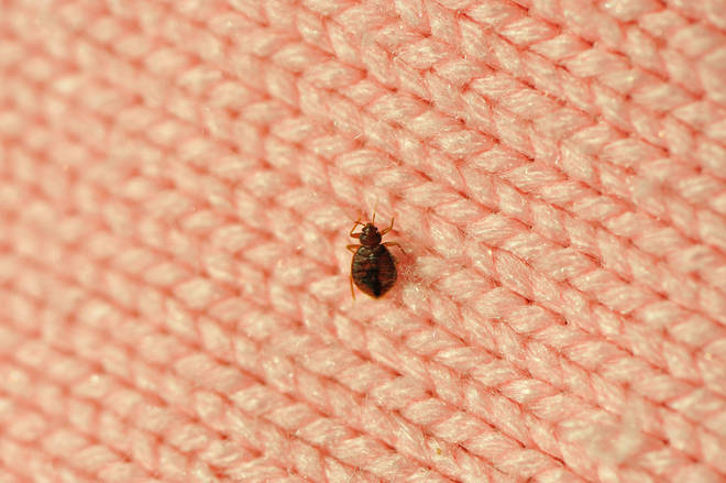 The new law will mean that landlords also have to sort out infestations - such as bedbugs - in homes (stock image)