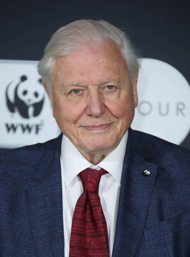 National treasure Sir David Attenborough urges us to tackle climate change